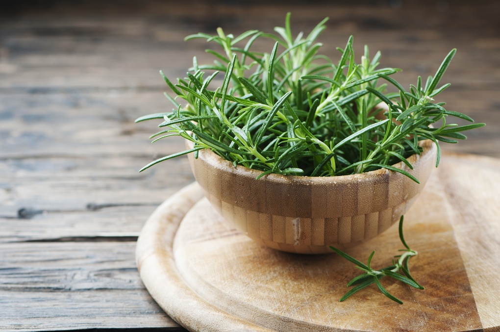 Fresh green aromatic rosemary on the wooden table